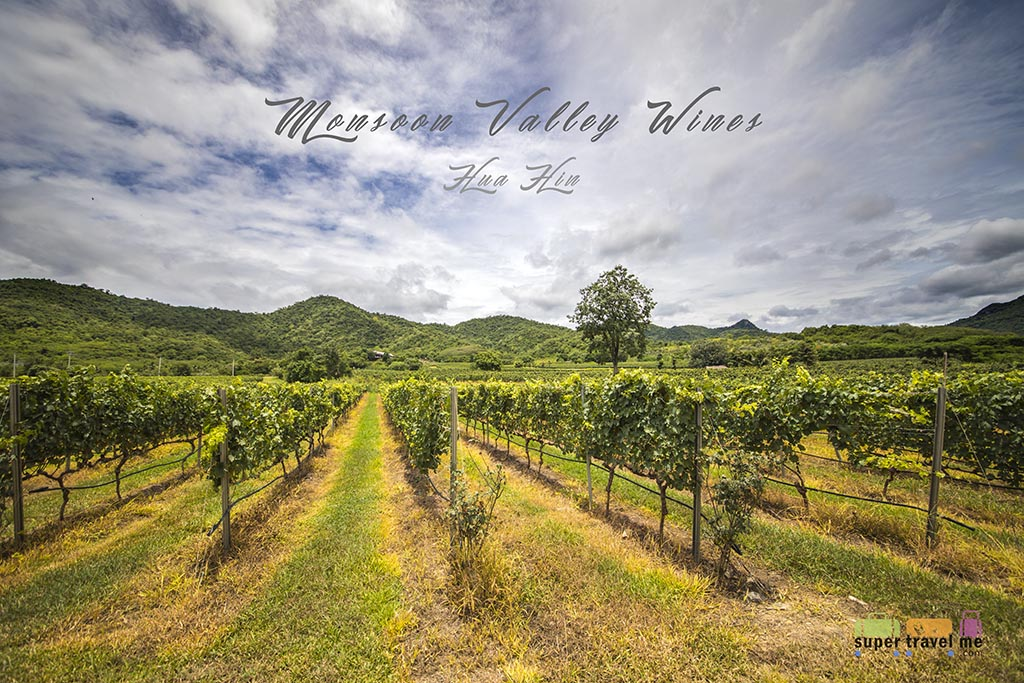 Monsoon Valley Wines in Hua Hin