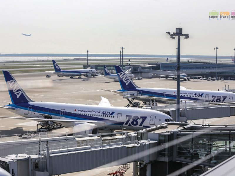 ANA Dreamliners at Haneda Domestic Terminal