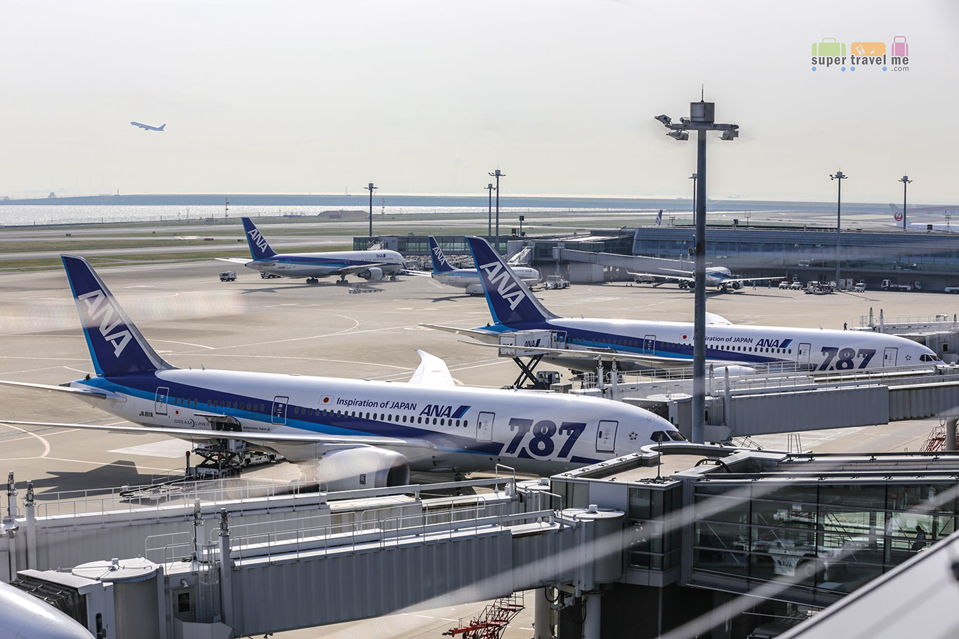 ANA Dreamliners at Haneda Domestic Terminal